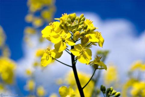 blau gelb